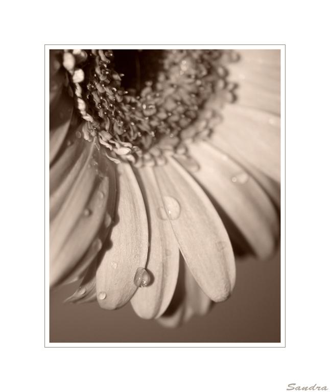 ~ ° flower die 2te ° ~