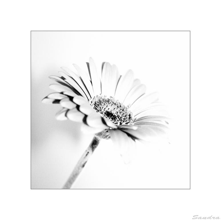 ~ ° flower °~