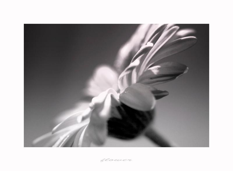 °~° flower °~°
