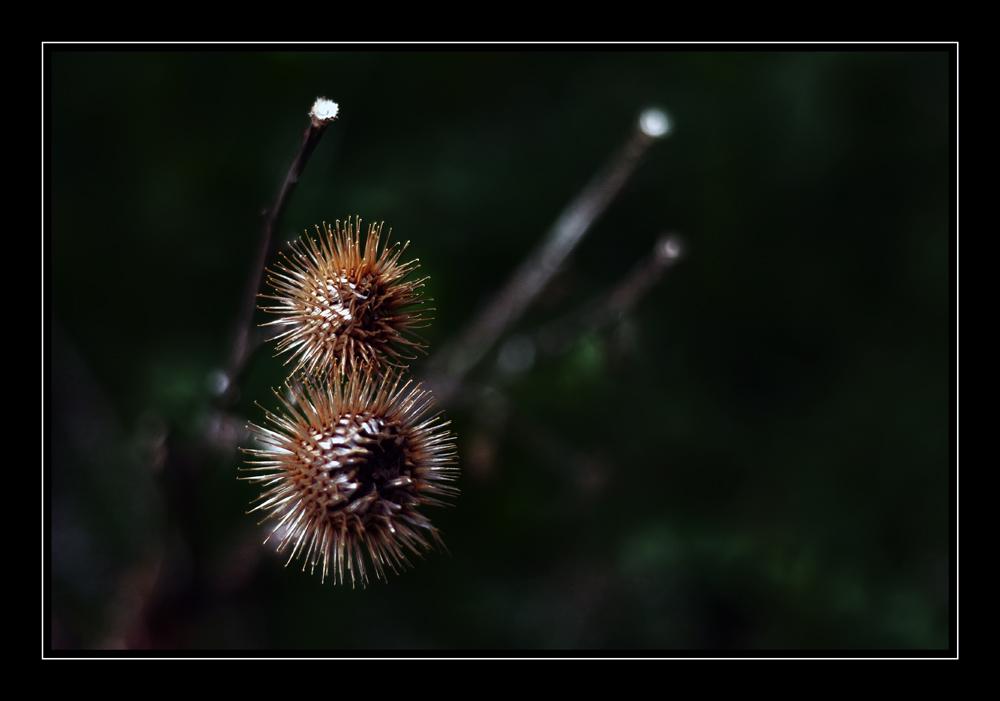 flower flowers......bummmmm
