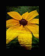 Flower for my Love