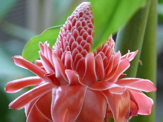 Flower from Yangon