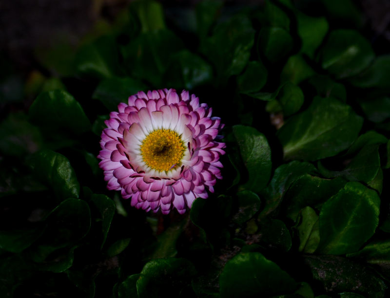 Flower (gele)