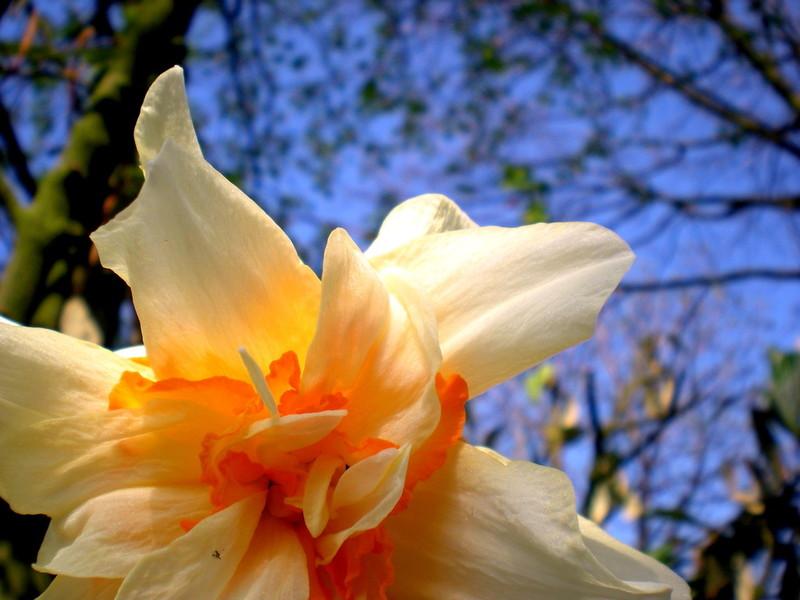 ..Flower grows into Sky..
