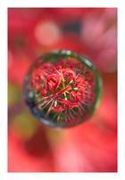 Flower in Cercle[21]