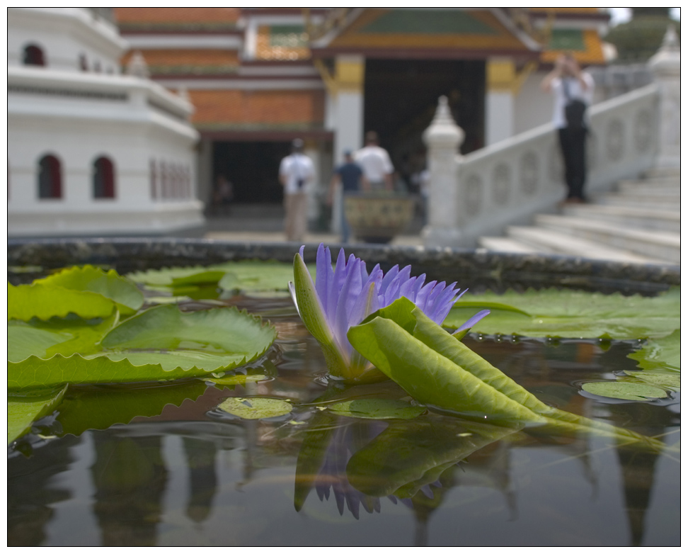 Flower in Grand Palace