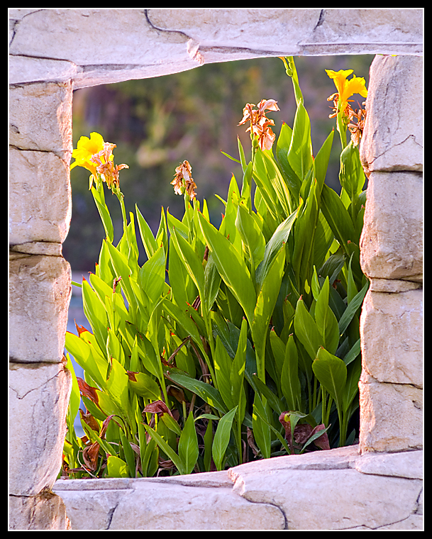 Flower in Natural frame