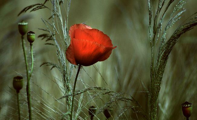 Flower in the dust