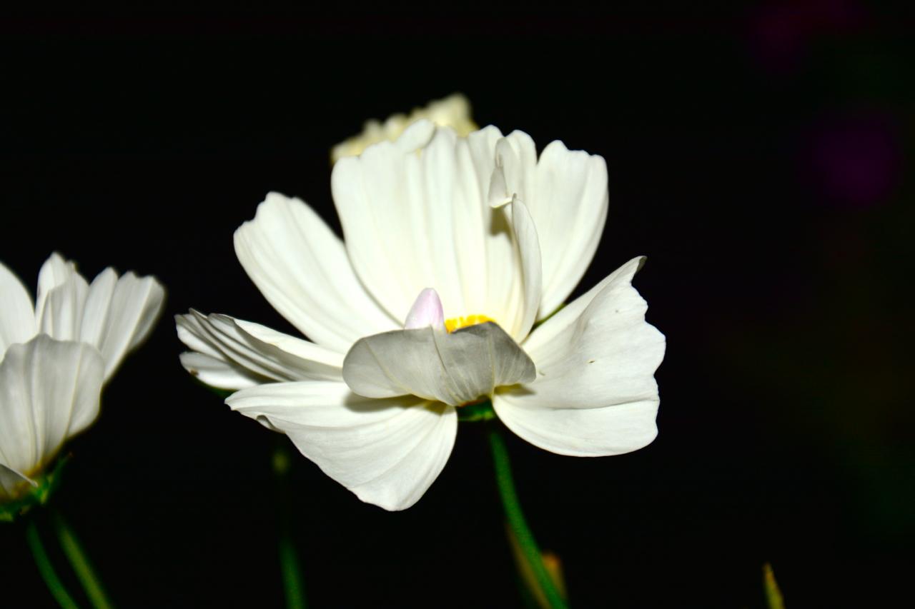 Flower in the Moonlight