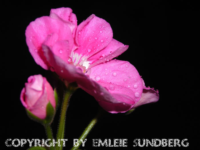 Flower in the night...