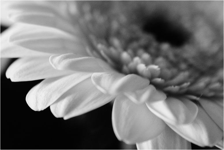 flower in your heart