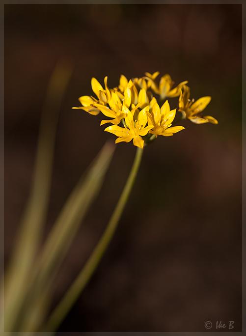 ~ Flower-Life ~