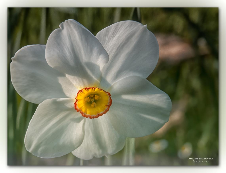 Flower No. 1057