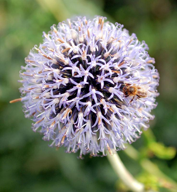 Flower No.2