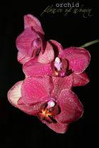 Flower of women