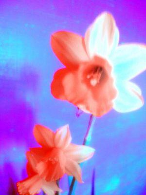 Flower Pauwer !! ^^