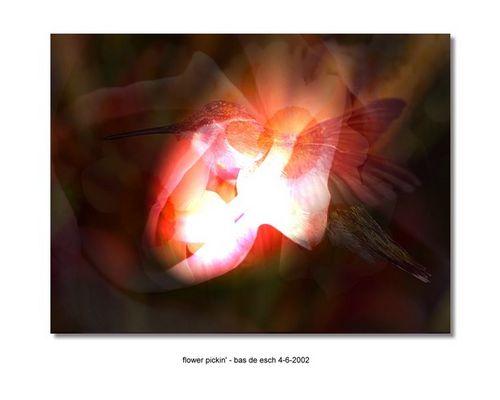 flower picki'- bas de esch   www.dreamscapedesigns.nl