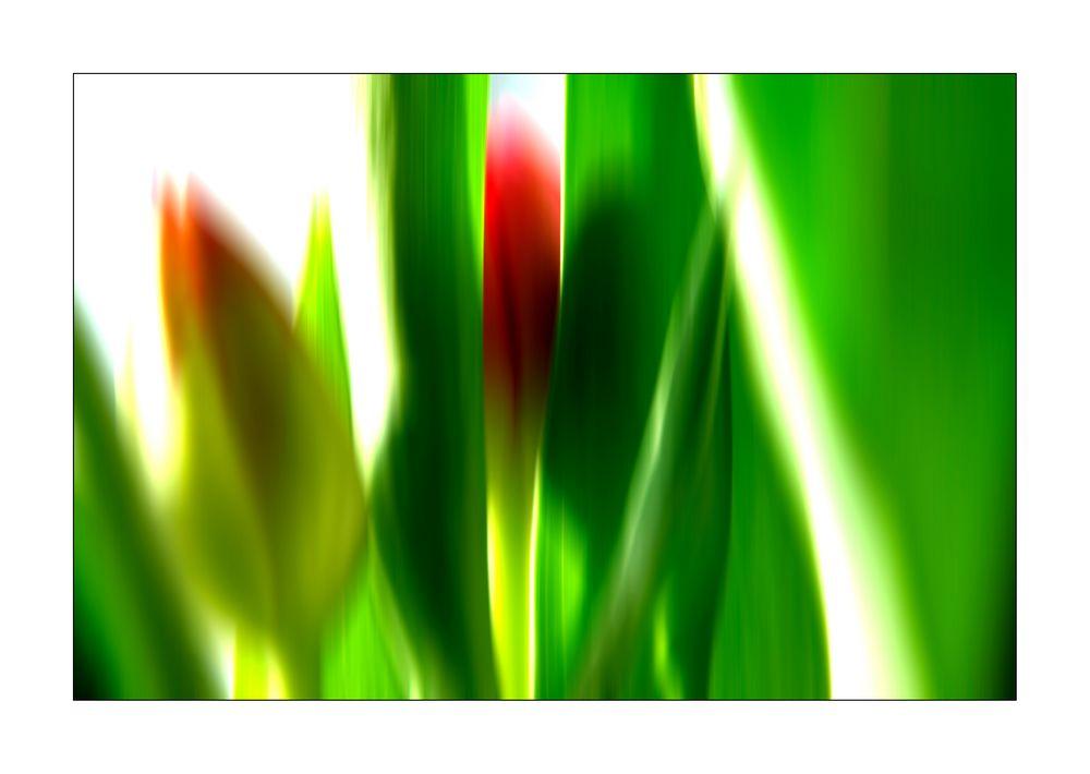 Flower Power 1