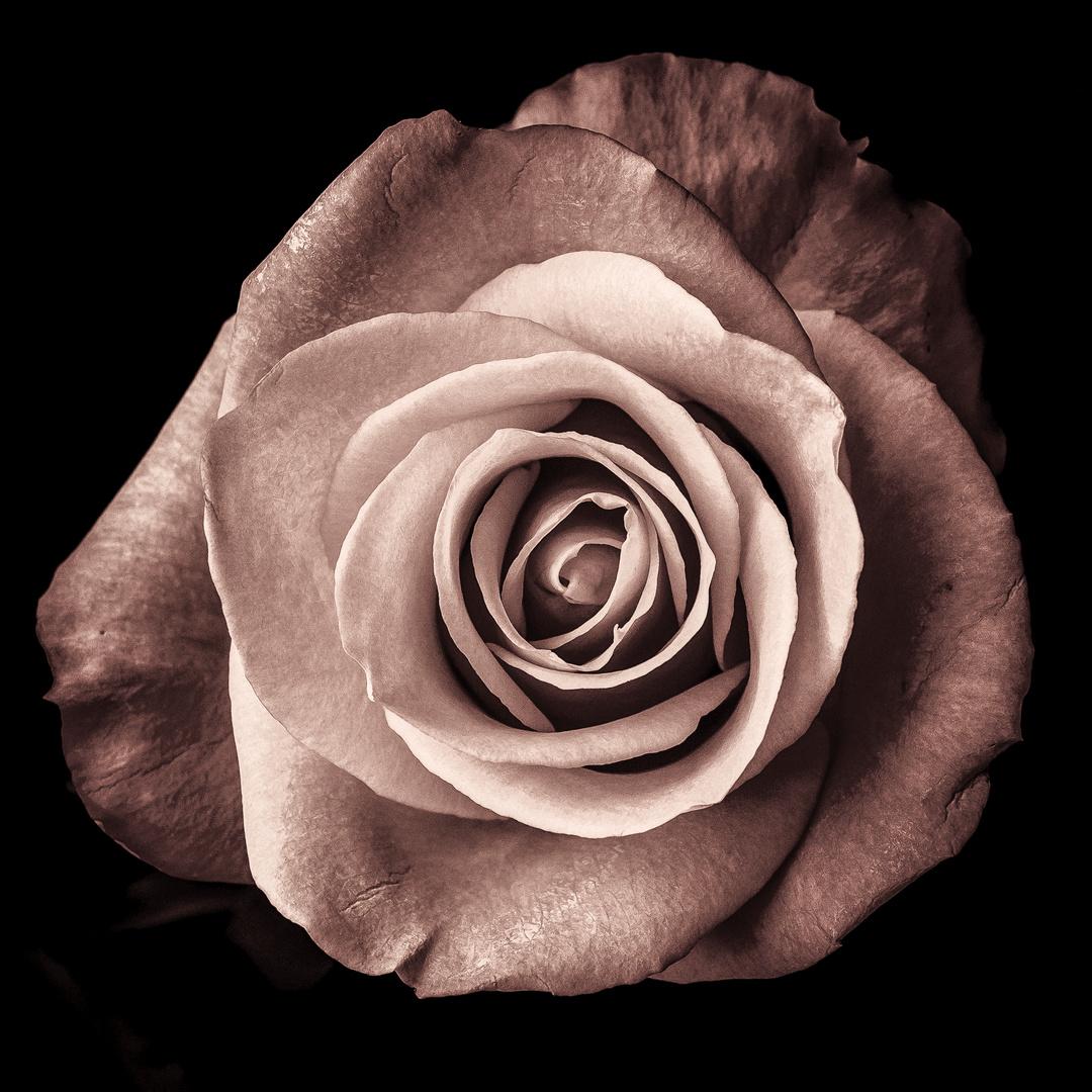 flower power foto bild flower natur monochrome bilder auf fotocommunity. Black Bedroom Furniture Sets. Home Design Ideas
