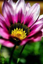 flower power......