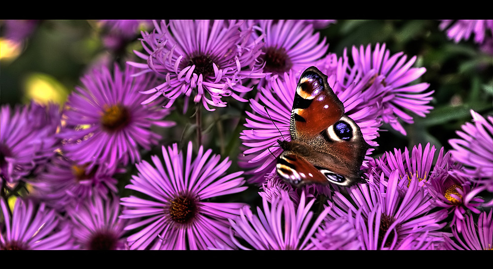 Flower - Power
