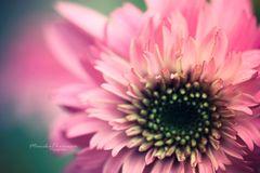 flower power*