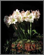 ...flower power...
