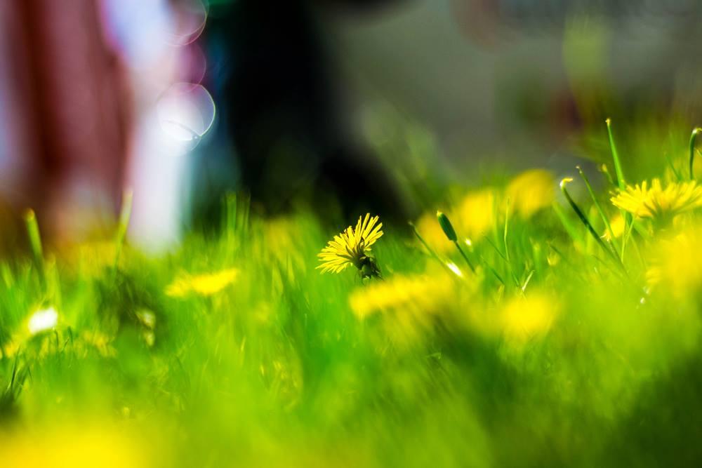 Flower Power Bokeh