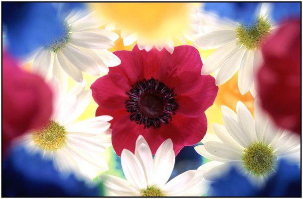"""Flower-Power"""