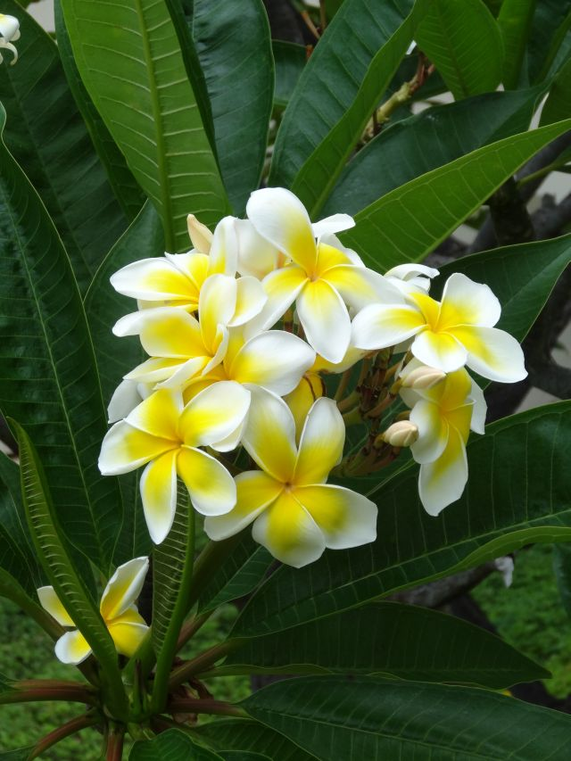 Flower Power of Maui