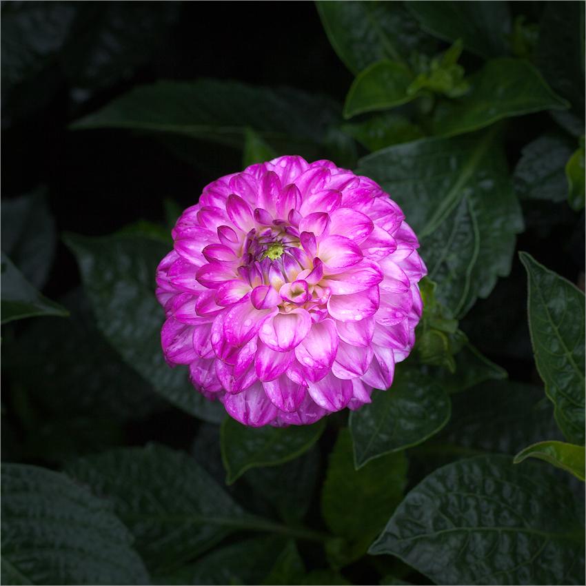 flower power - violet