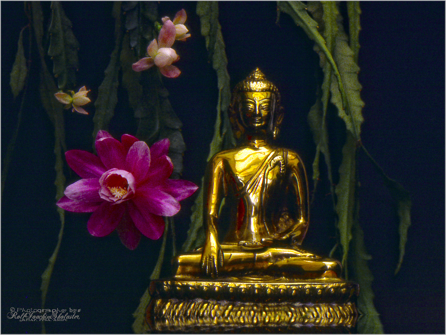 '' Flower to Bouddha ''