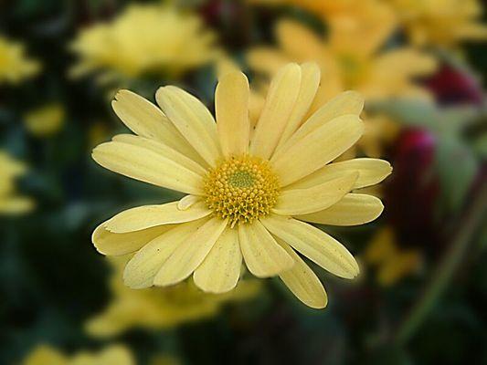 Flower under Focus