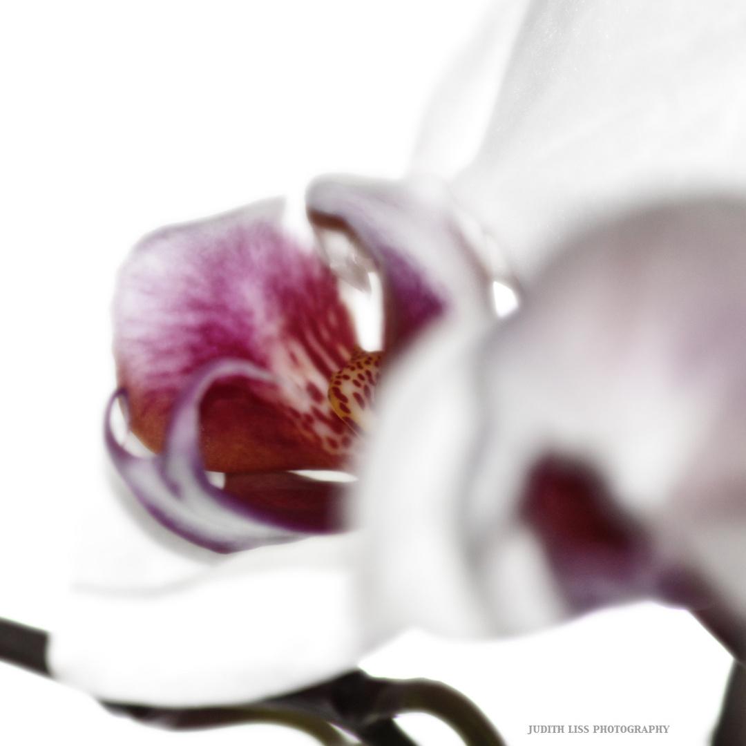 Flower#4