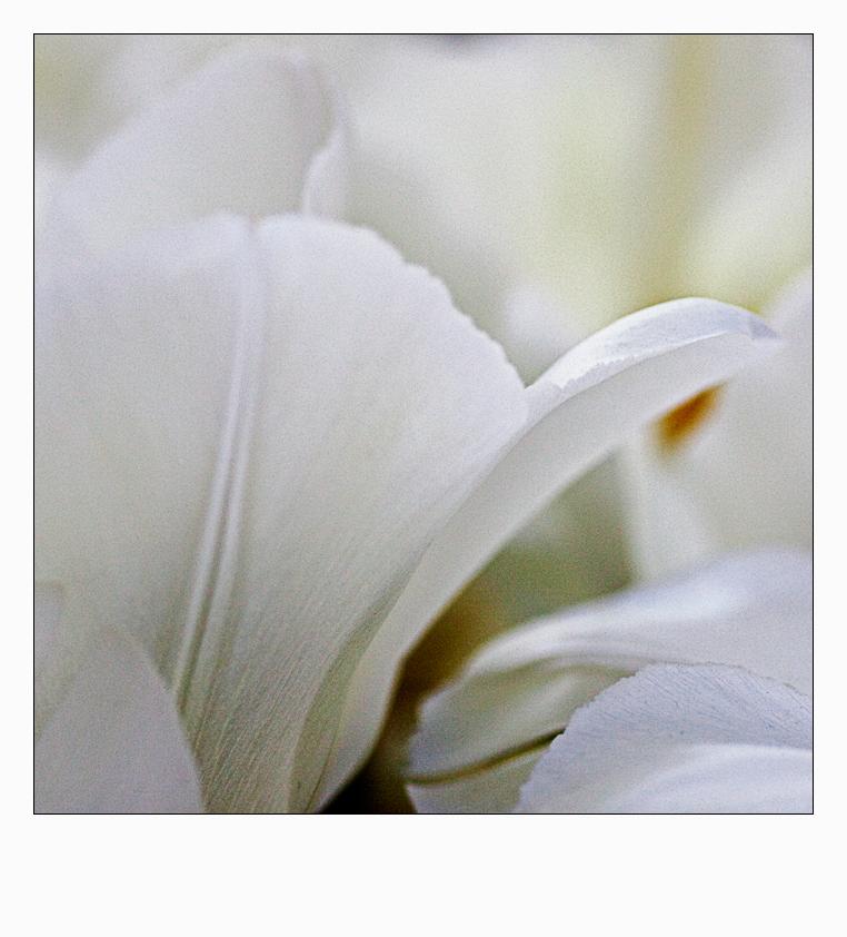 flower_art #36