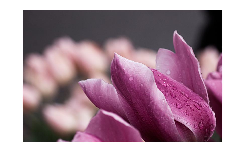 flower_art #38