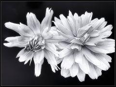 *FlowerArt*