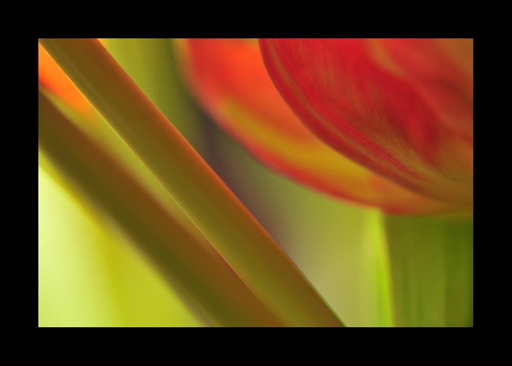 flower.art IV