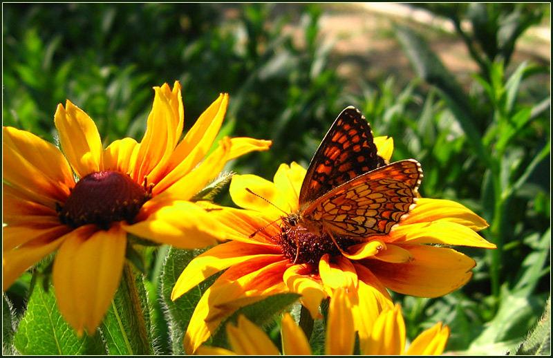 FlowerButterfly