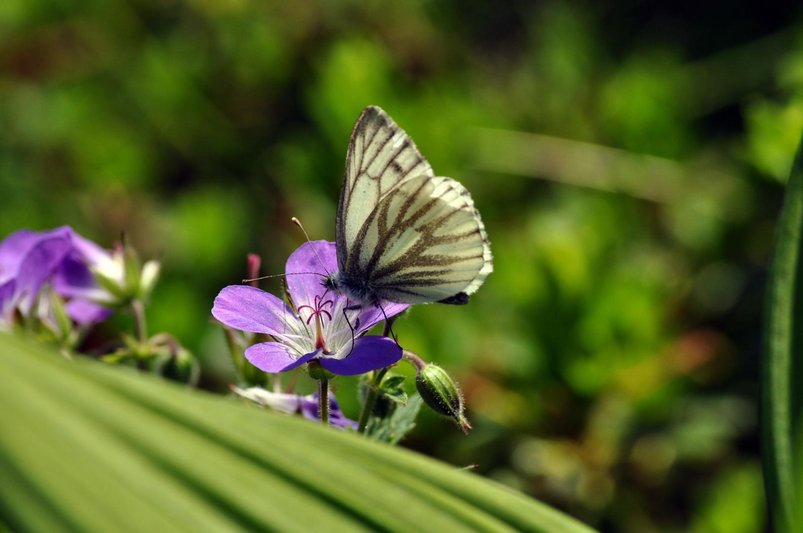 Flowerduett