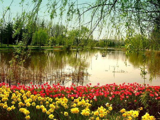 Flowered lake