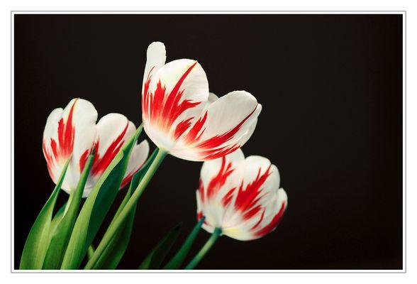 flowerflames