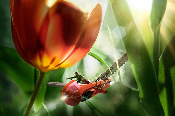 Flowerflyer
