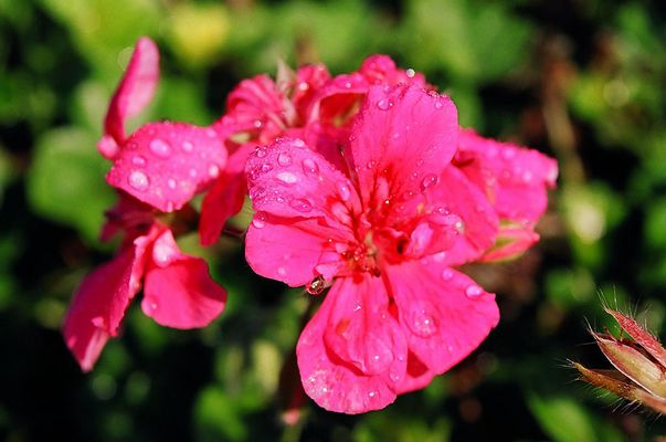 Flowerpot on Ruggles Av.