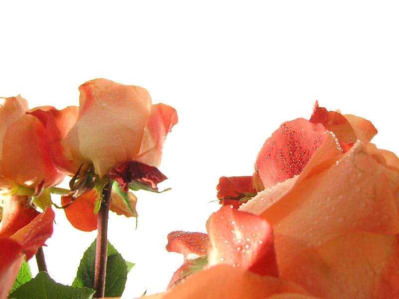 flowerpower 06