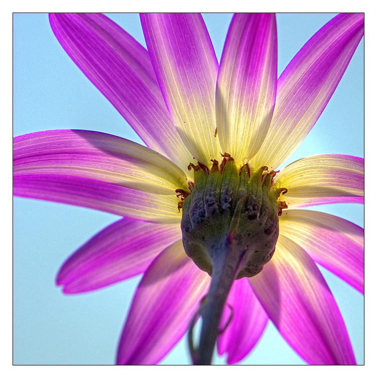 Flowerpower #2