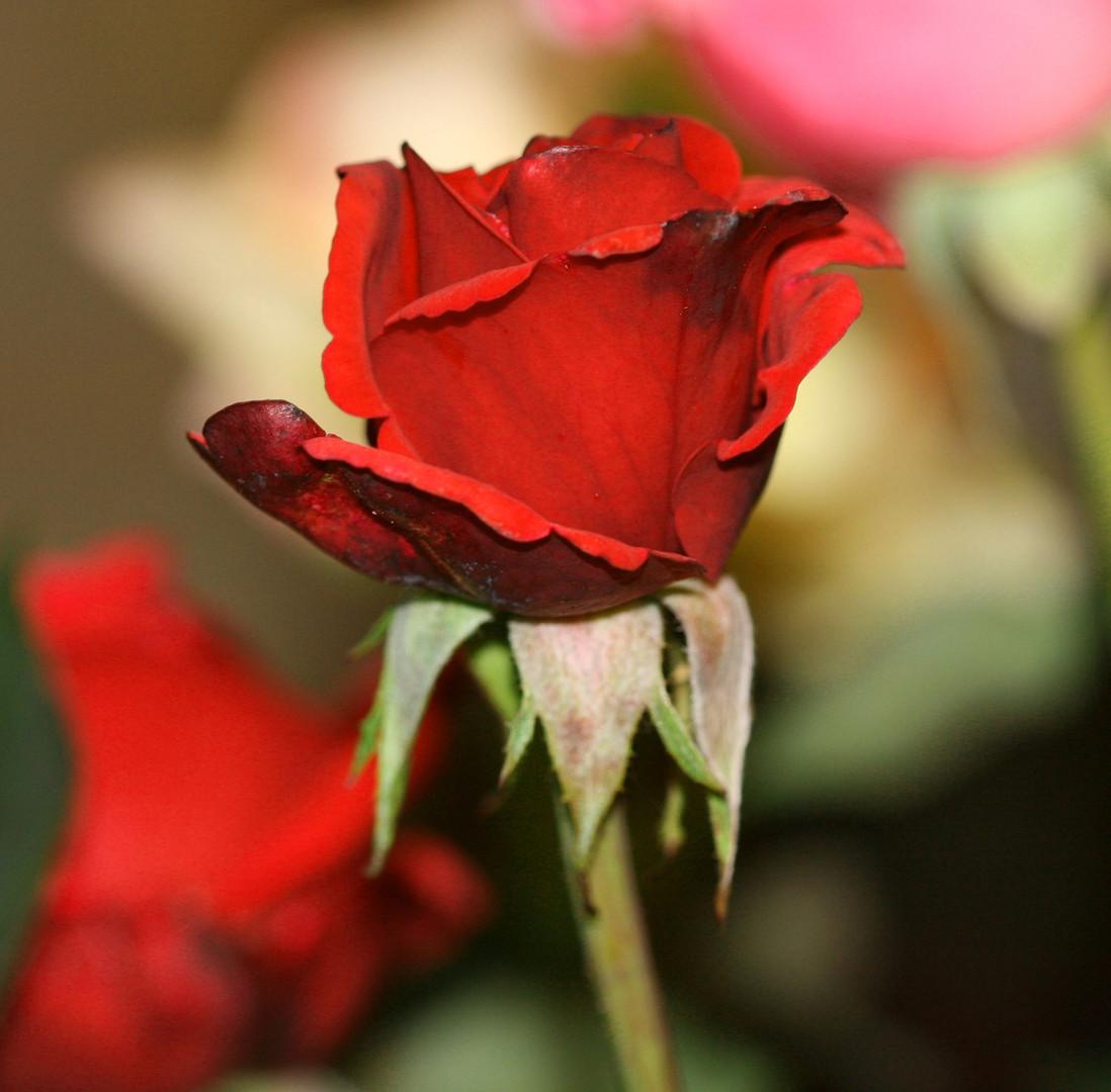 Flowerpower aus Drahtgeflecht