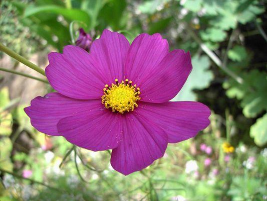 FlowerPower im Hausgarten