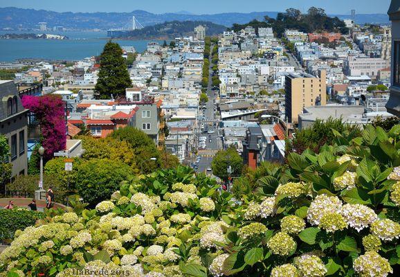 Flowerpower in San Francisco