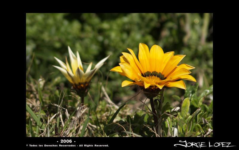 Flowers # 1